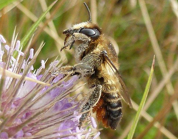 Photo © Patrick Le Mao / Galerie du Monde des insectes / www.galerie-insecte.org. CC BY-NC (2019)