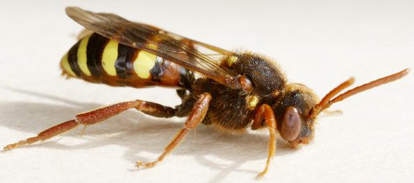 Photo © Bernard Mallet / Galerie du Monde des insectes / www.galerie-insecte.org. CC BY-NC (2019)