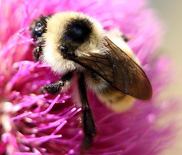 Photo © fdttl / Galerie du Monde des insectes / www.galerie-insecte.org. CC BY-NC (2019)