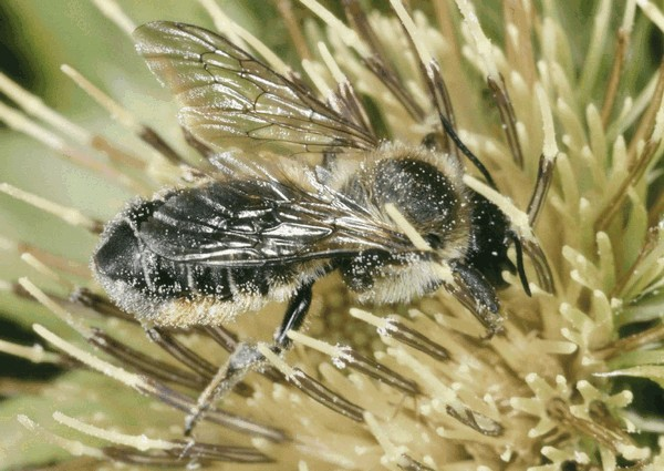 Entomologie/Botanik, ETH Zürich / Fotograf: Albert Krebs. CC BY-SA 4.0