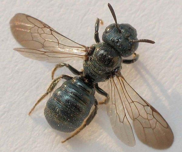 Photo © Matthieu Pilard / Galerie du Monde des insectes / www.galerie-insecte.org. CC BY-NC (2019)