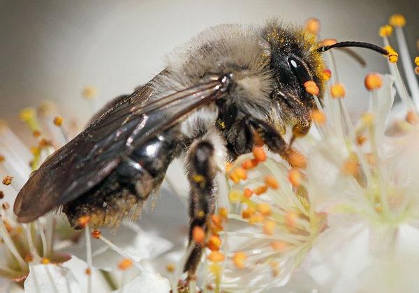 Photo © Patrick Derennes / Galerie du Monde des insectes / www.galerie-insecte.org. CC BY-NC (2019)