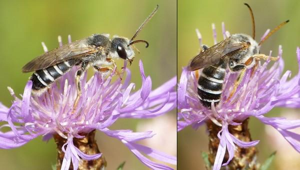 Photo © Simon Barbier / Galerie du Monde des insectes / www.galerie-insecte.org. CC BY-NC (2019)