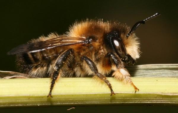 Photo © LAIR Christophe / Galerie du Monde des insectes / www.galerie-insecte.org. CC BY-NC (2019)