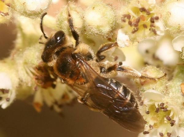 Photo © LAIR Christophe / Galerie du Monde des insectes / www.galerie-insecte.org. CC BY-NC 4.0