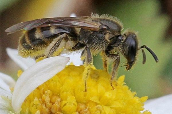 Photo © Michel Ehrhardt / Galerie du Monde des insectes / www.galerie-insecte.org. CC BY-NC (2019)