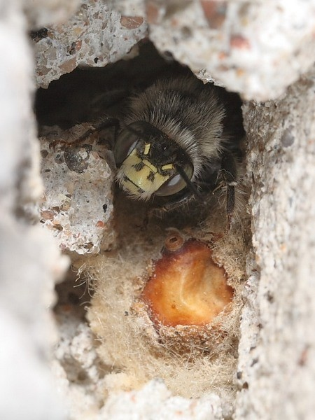 Photo © Lauri Koivulehto 2008. Free for non-commercial use.