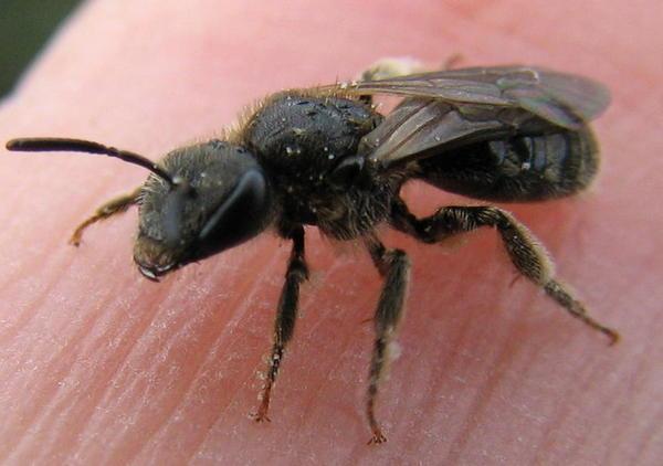 Photo © Elisabeth A. Harris / Galerie du Monde des insectes / www.galerie-insecte.org. CC BY-NC (2019)