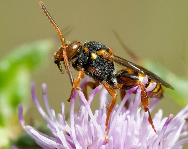 Photo © Eugène Vandebeulque / Galerie du Monde des insectes / www.galerie-insecte.org. CC BY-NC (2019)