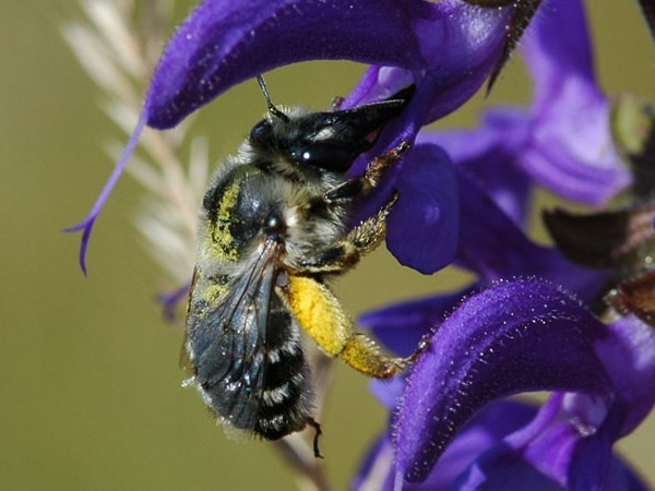 Photo Cor Zonneveld / Natural History Photographs. For non-commercial purposes