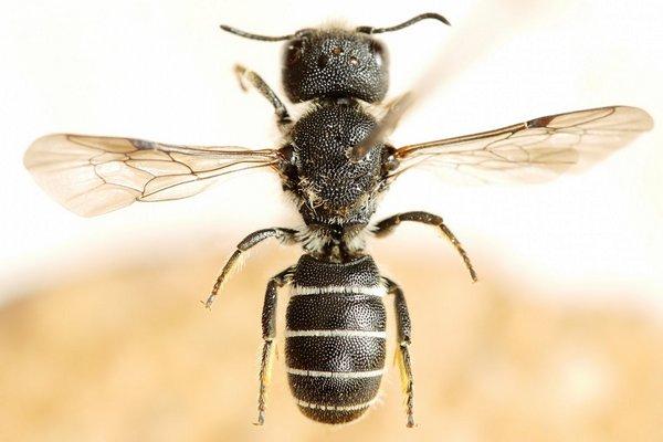 Photo © Nicolas Baudet / Galerie du Monde des insectes / www.galerie-insecte.org. CC BY-NC (2019)