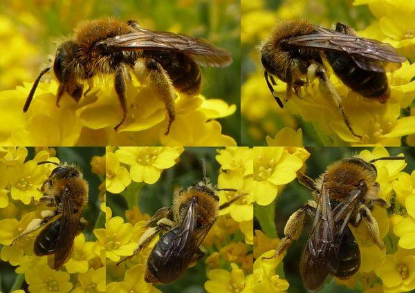 Photo © Eric Picollet / Galerie du Monde des insectes / www.galerie-insecte.org. CC BY-NC 4.0