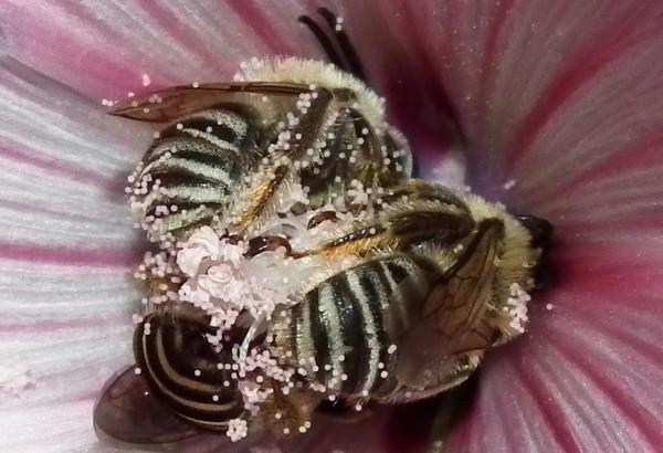 Photo © Gauthier / Galerie du Monde des insectes / www.galerie-insecte.org. CC BY-NC 4.0