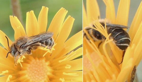 Photo © Raphael / Galerie du Monde des insectes / www.galerie-insecte.org. CC BY-NC 4.0