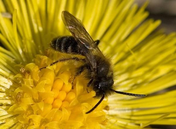 Самец. Photo Cor Zonneveld www.corzonneveld.nl