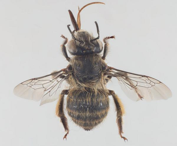 Photo Arnstein Staverløkk / Norsk institutt for naturforskning. CC BY-SA 4.0