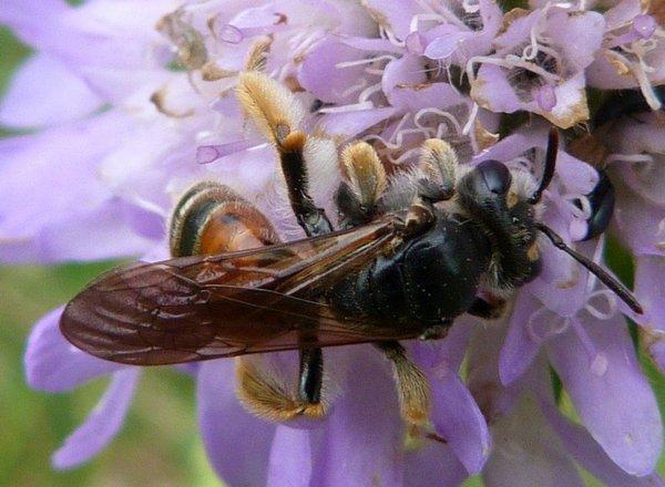 Photo © Joël DELLIS / Galerie du Monde des insectes / www.galerie-insecte.org. CC BY-NC (2019)