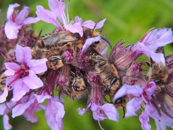 Photo © Raphael / Galerie du Monde des insectes / www.galerie-insecte.org. CC BY-NC (2019)