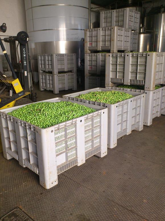 Übergabe der Oliven in der Olivenmühle