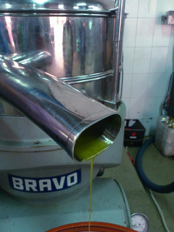 Das gepresste Olivenöl wird in Fässer abgefüllt