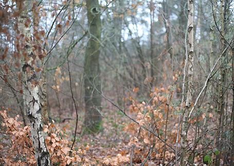 Wendland Sitznische mit Blick in den  Wald Birken