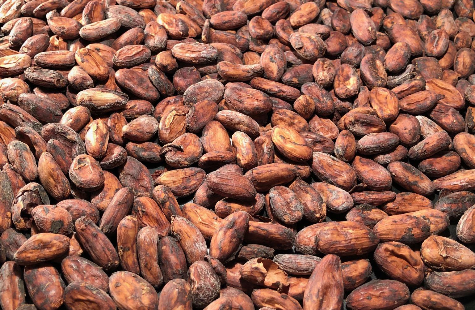 Kakaobohnen aus Madagaskar