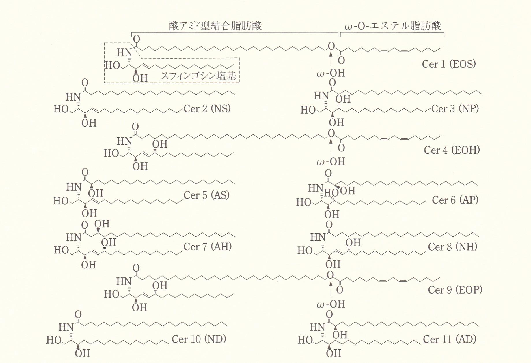 セラミドEOPとセラミドEOS - 天然ヒト型セラミド配合クリーム ...