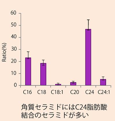 脂肪酸の炭素数からみた角質セラミドの分布