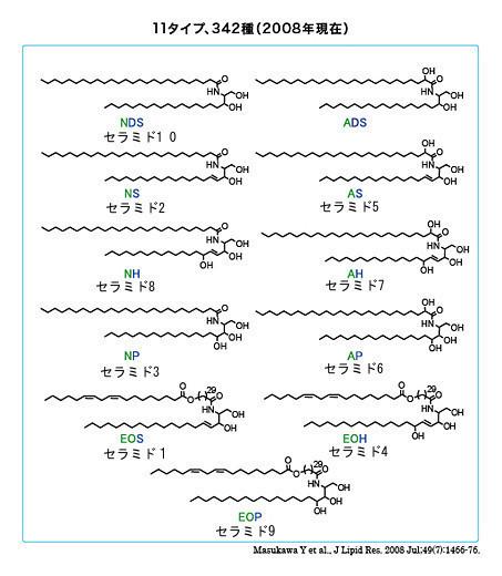 セラミドの分類
