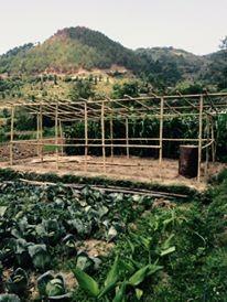 Les Népalais plus enclins à utiliser le bambou que des bâches