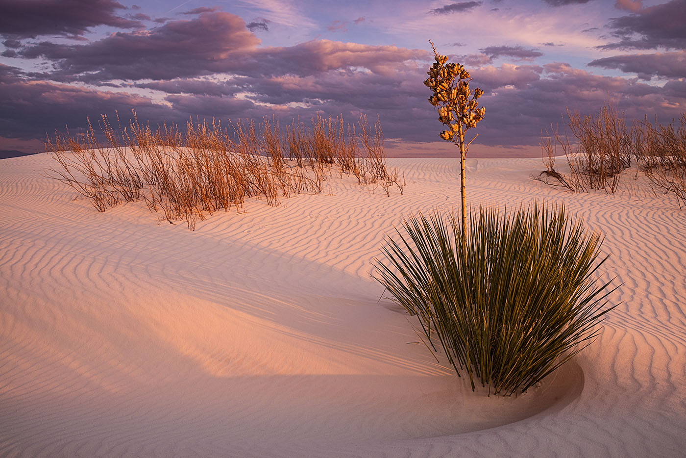 "Pictorial Color: ""White Sands Scene""  by Chuck Zamites"