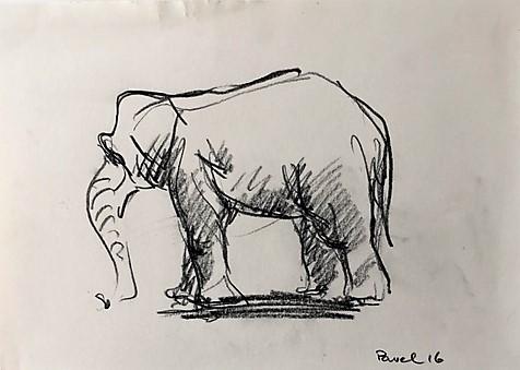 Pavel Feinstein: *Elefant*, 2016, Skizze/Papier, 21 x 30 cm
