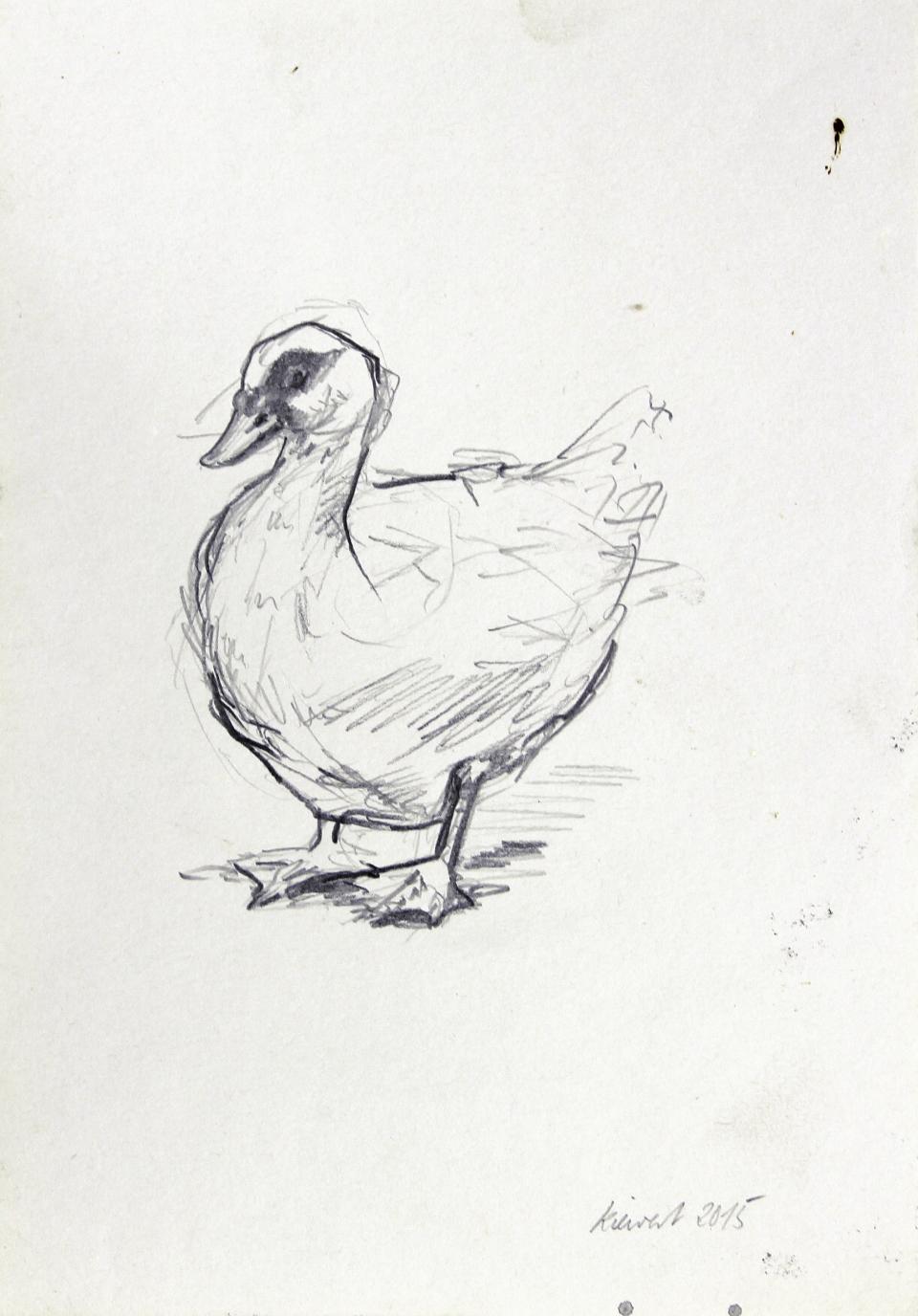 Hartmut Kiewert: *Warzenente*, 2015, Bleistift/Papier, 27 x 18,5 cm