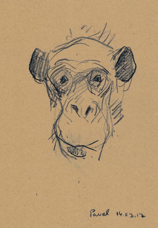 Pavel Feinstein: *Zoo 14.3.17*, 2017, Buntstift/Papier, 21 x 29,7 cm