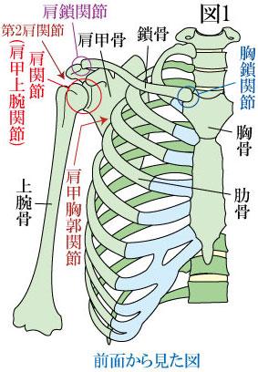 肩関節複合体