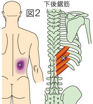 左 の 肋骨 の 下 が 痛い