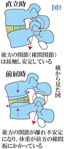 腰椎の前屈