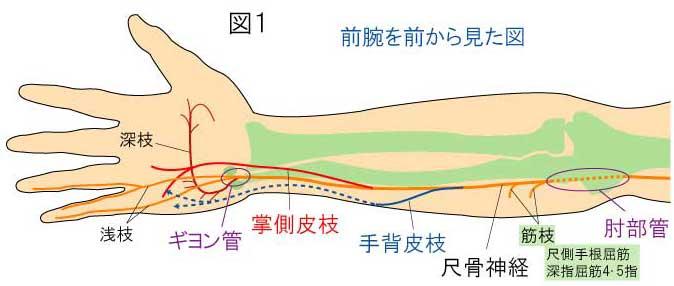 障害 尺骨 神経
