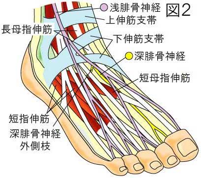 前足根管症候群