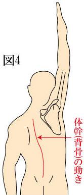体幹(背骨)の動き