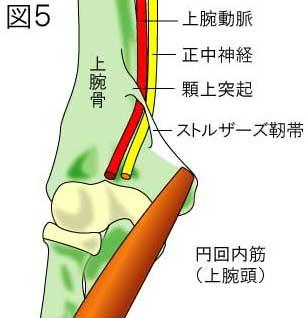 ストルザース靭帯