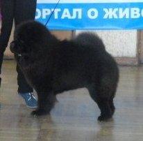 Минск,моно 18.02.2012г Ника