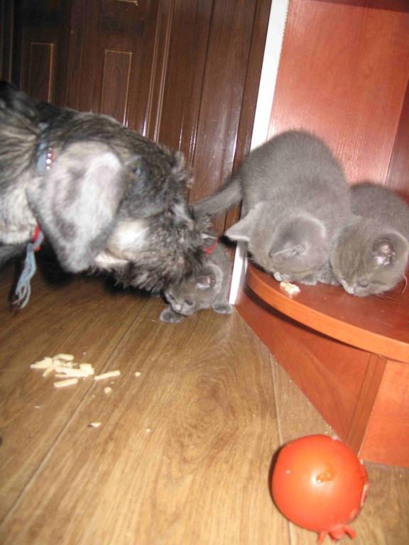 Сеня с котятами