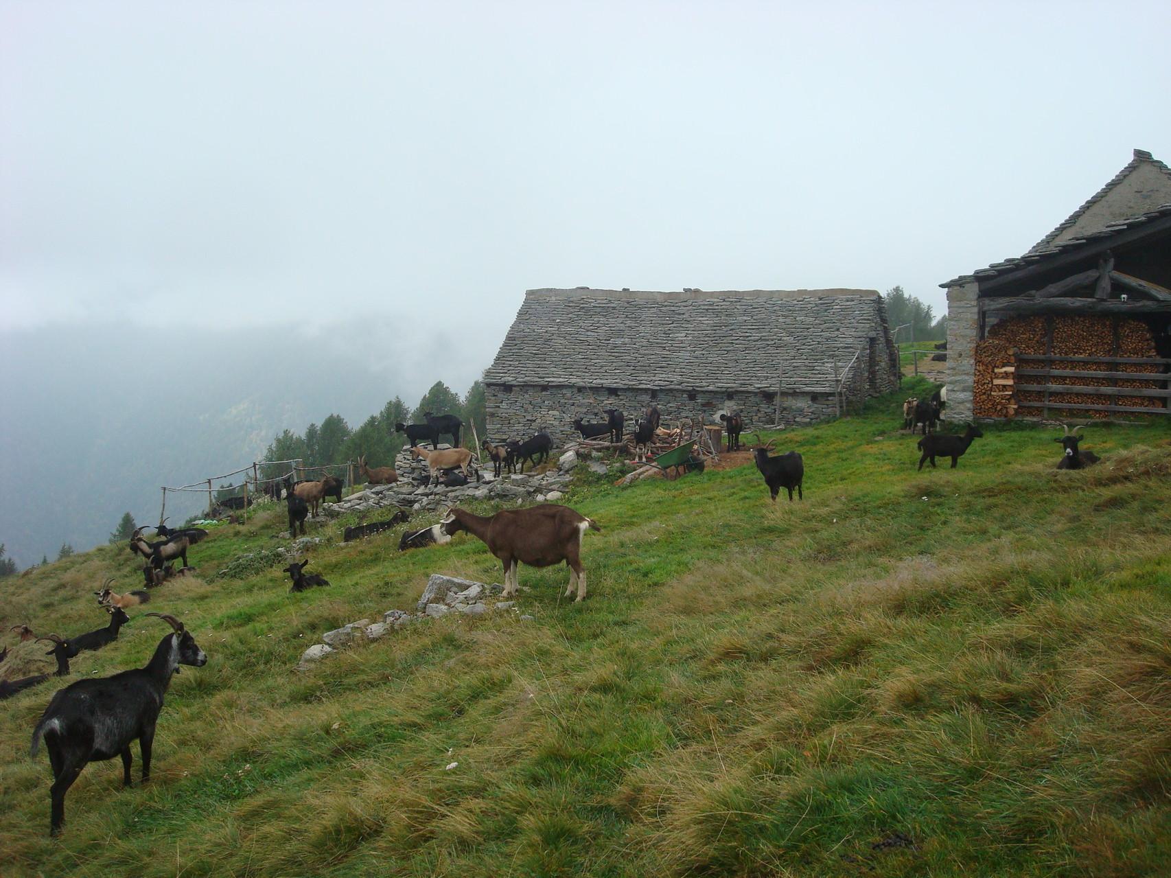 Alpe Pesced
