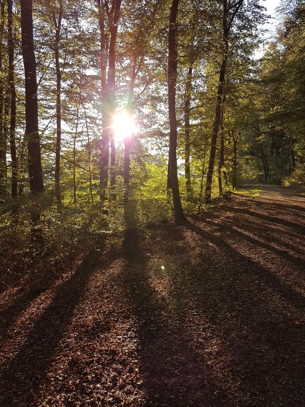 Das Licht durchleuchtet den Wald und macht die Schatten sichtbar, um den eigenen Weg zu sehen und ihn zu gehen.
