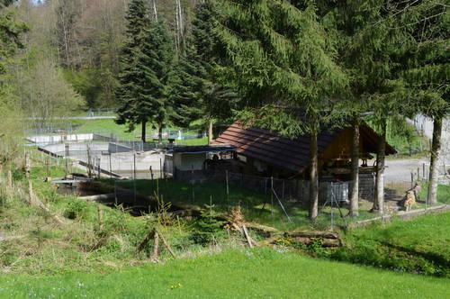Forellenzucht Thörigen - Spycher-Spargeln - Jordi-Hof Bewirtung und Übernachtung auf dem Bauernhof in Ochlenberg