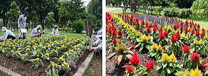 完成間近の花壇(左)、前週に完成した別の花壇(右)〕