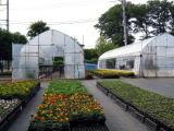 育苗センターで育てられた苗が、市内の花壇に運ばれていきます