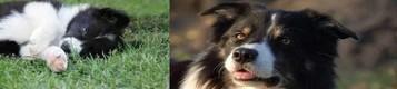 Unsere Turnierfreundin Jessy mit Border Ginny & Sleipi und Terrier SirHenry