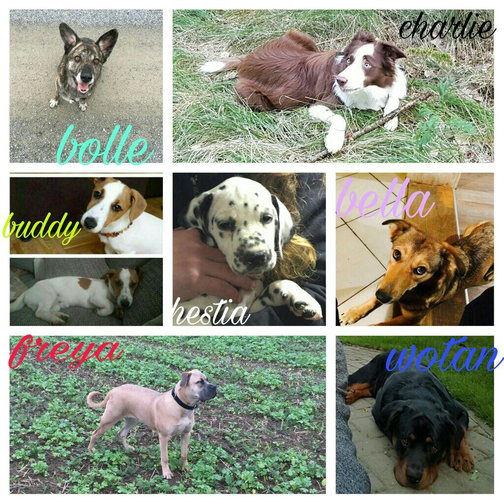 Unsere Hundetrainingsgruppe!!